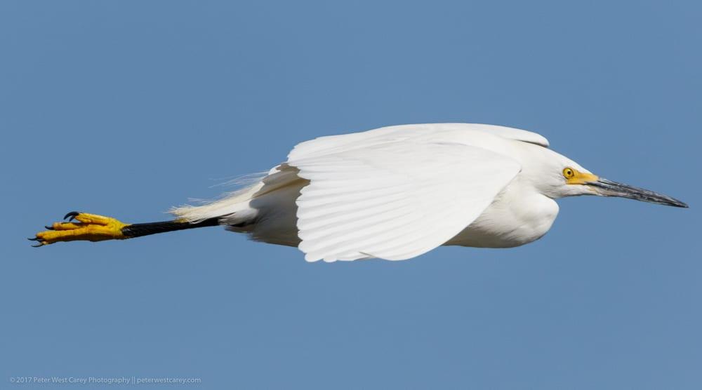 PeterWestCarey-Birds2018-0218-4193